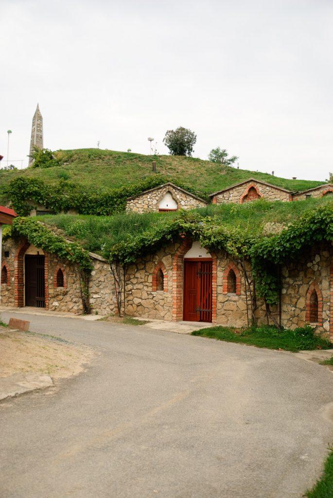 Piwniczki winne w miejscowości Vrbice