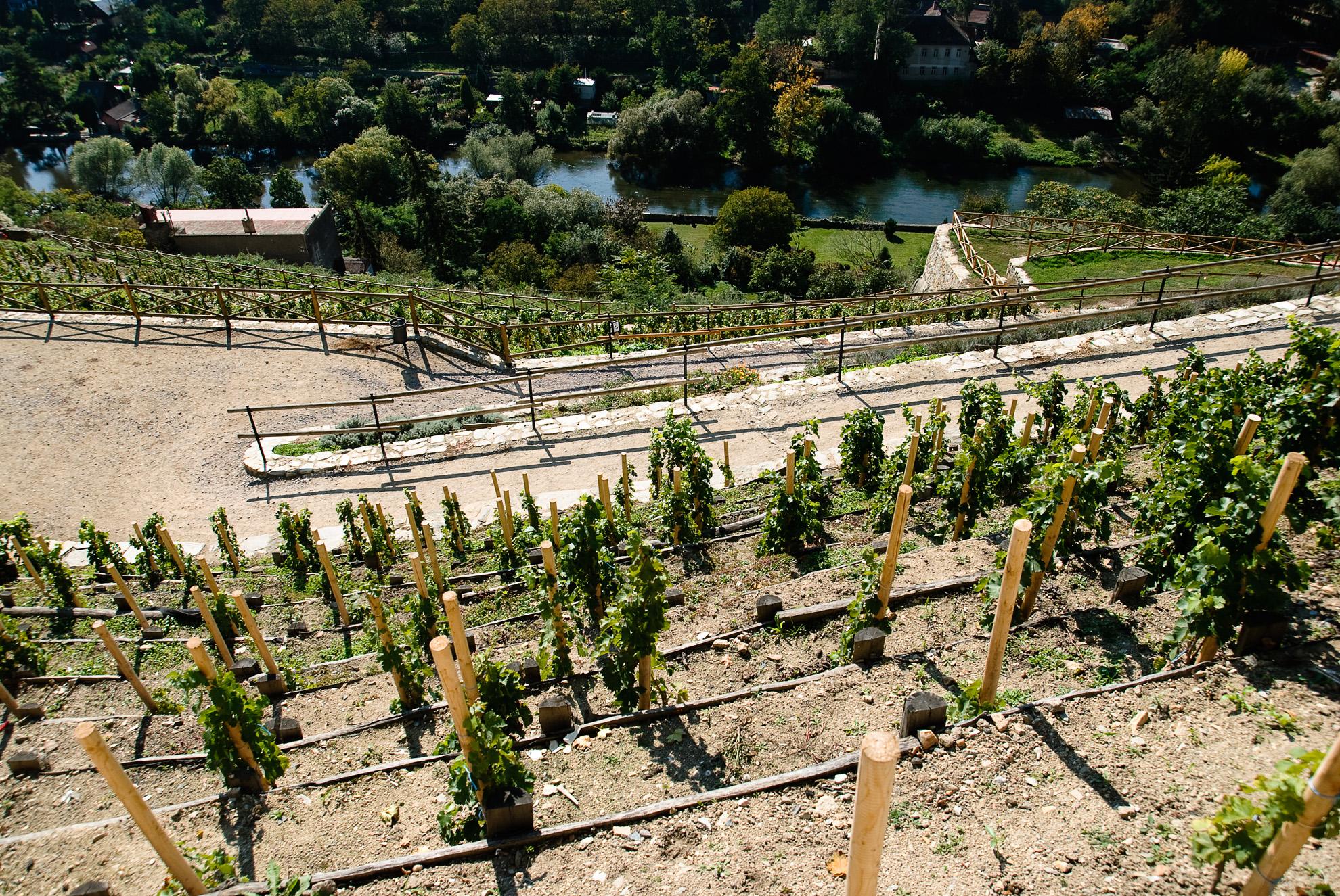 Winnice w Znojmie