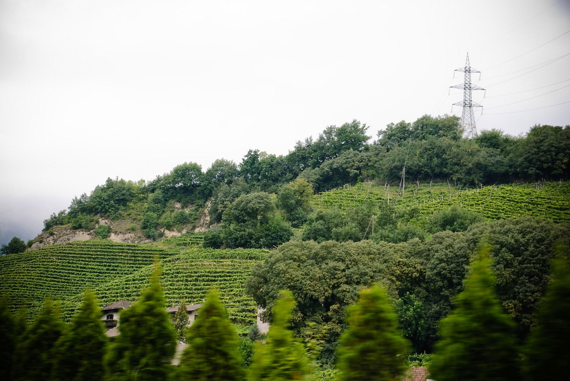 Winnice nieopodal Appiano sulla Strada del Vino
