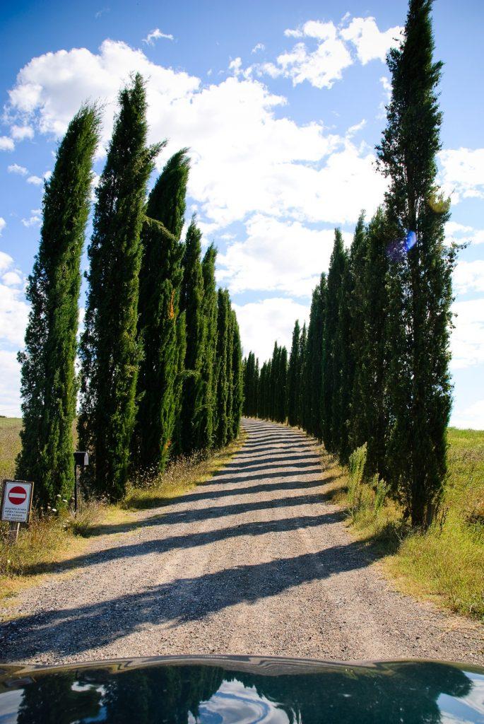 Aleja cyprysowa w Toskanii