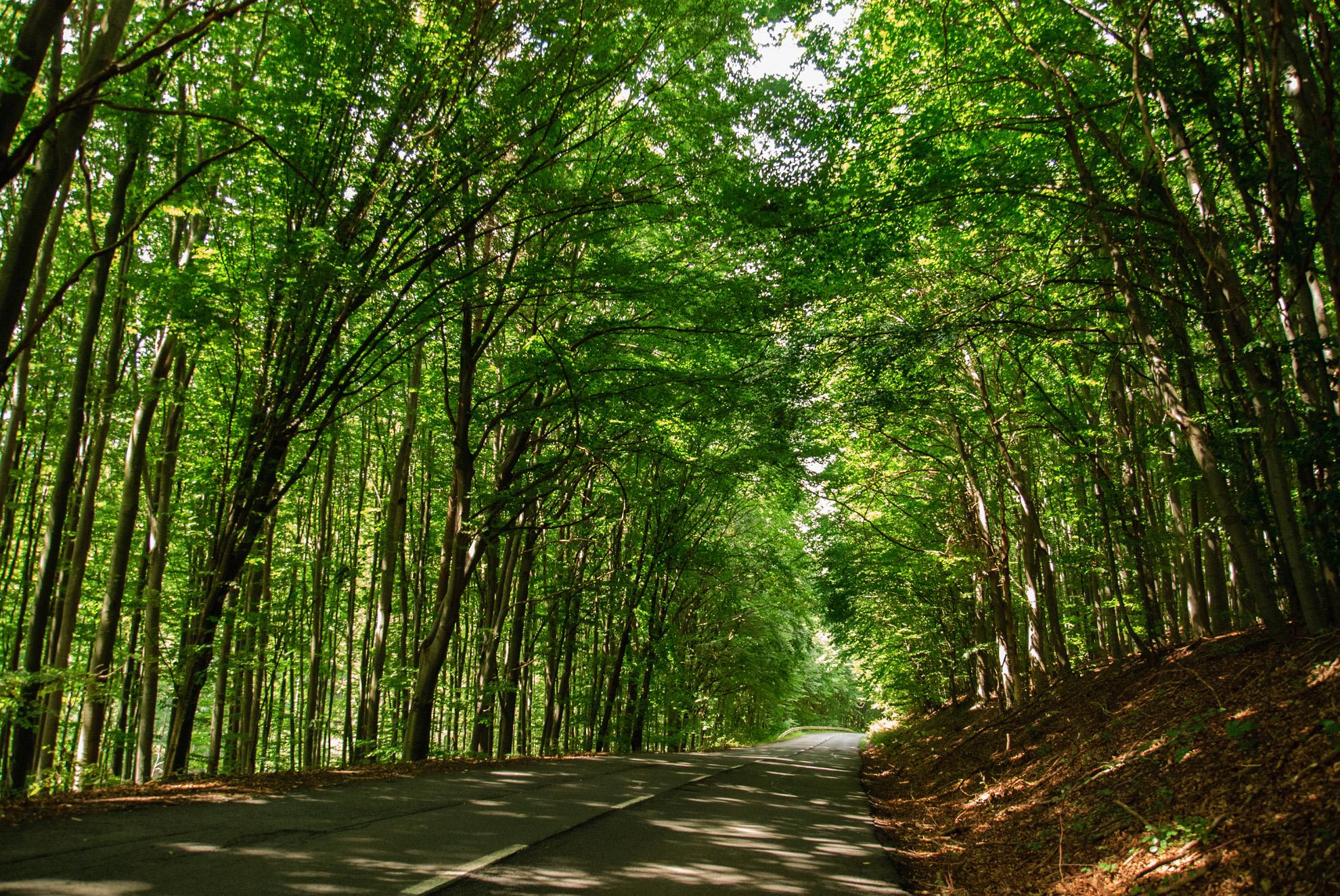 Kręta droga przez Góry Bukowe