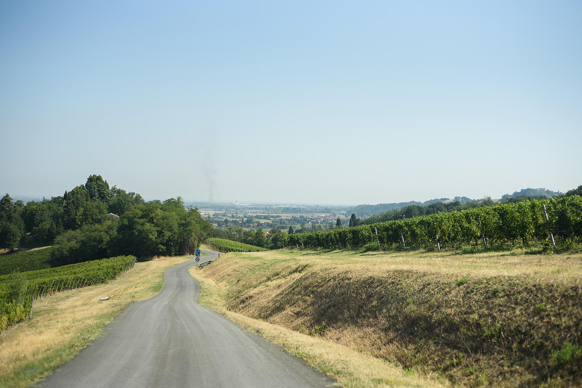 Monte delle Vigne