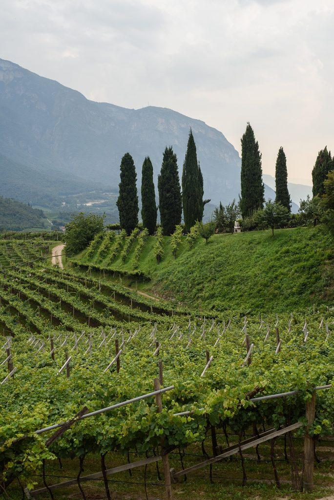 Winnica Agritur Castellar