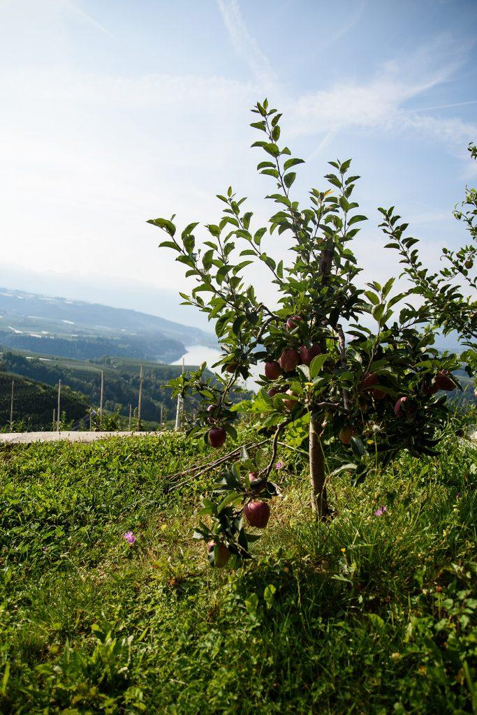 Cagno i Lago Di Santa Giustina