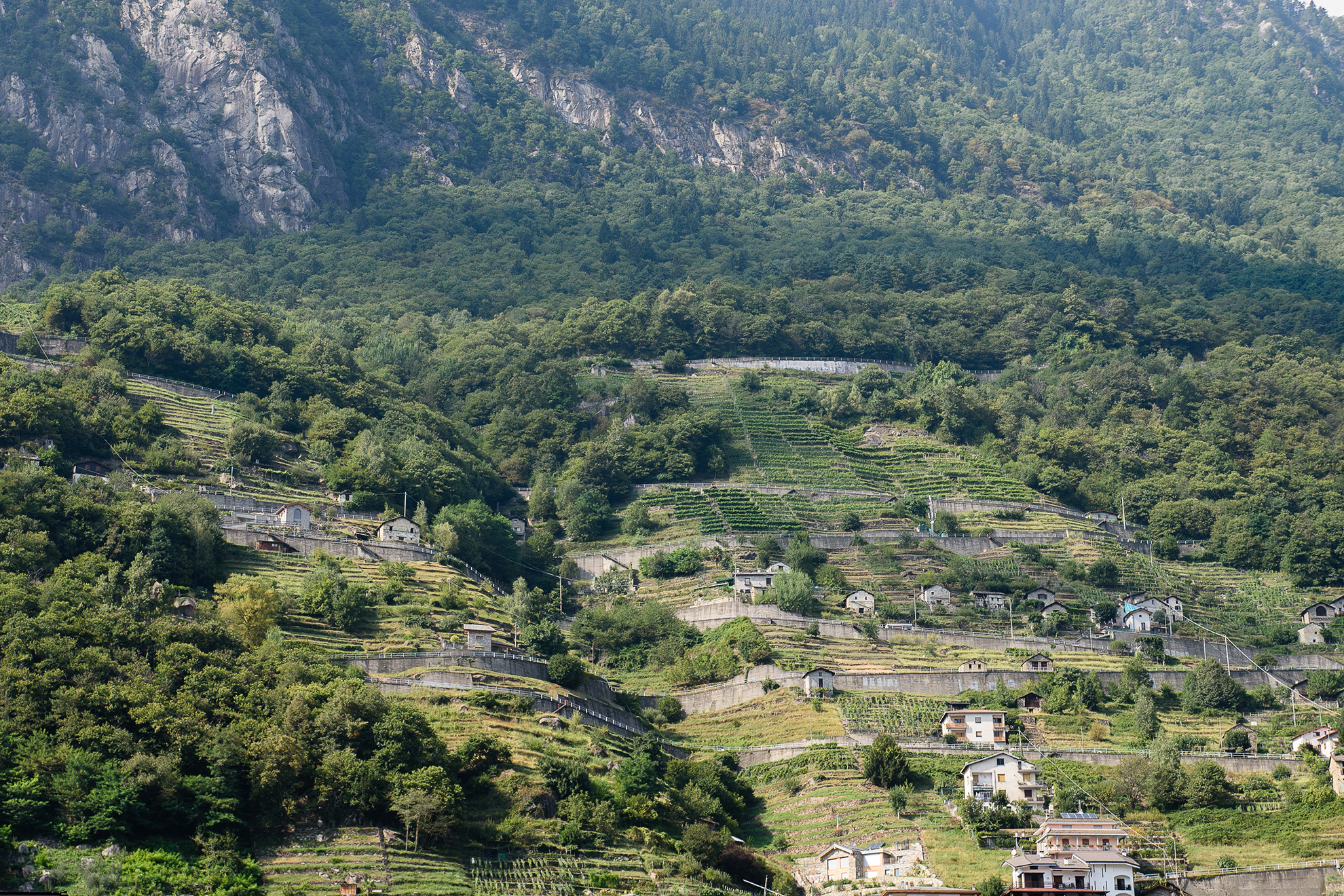 Winnice w pobliżu Chiavenny