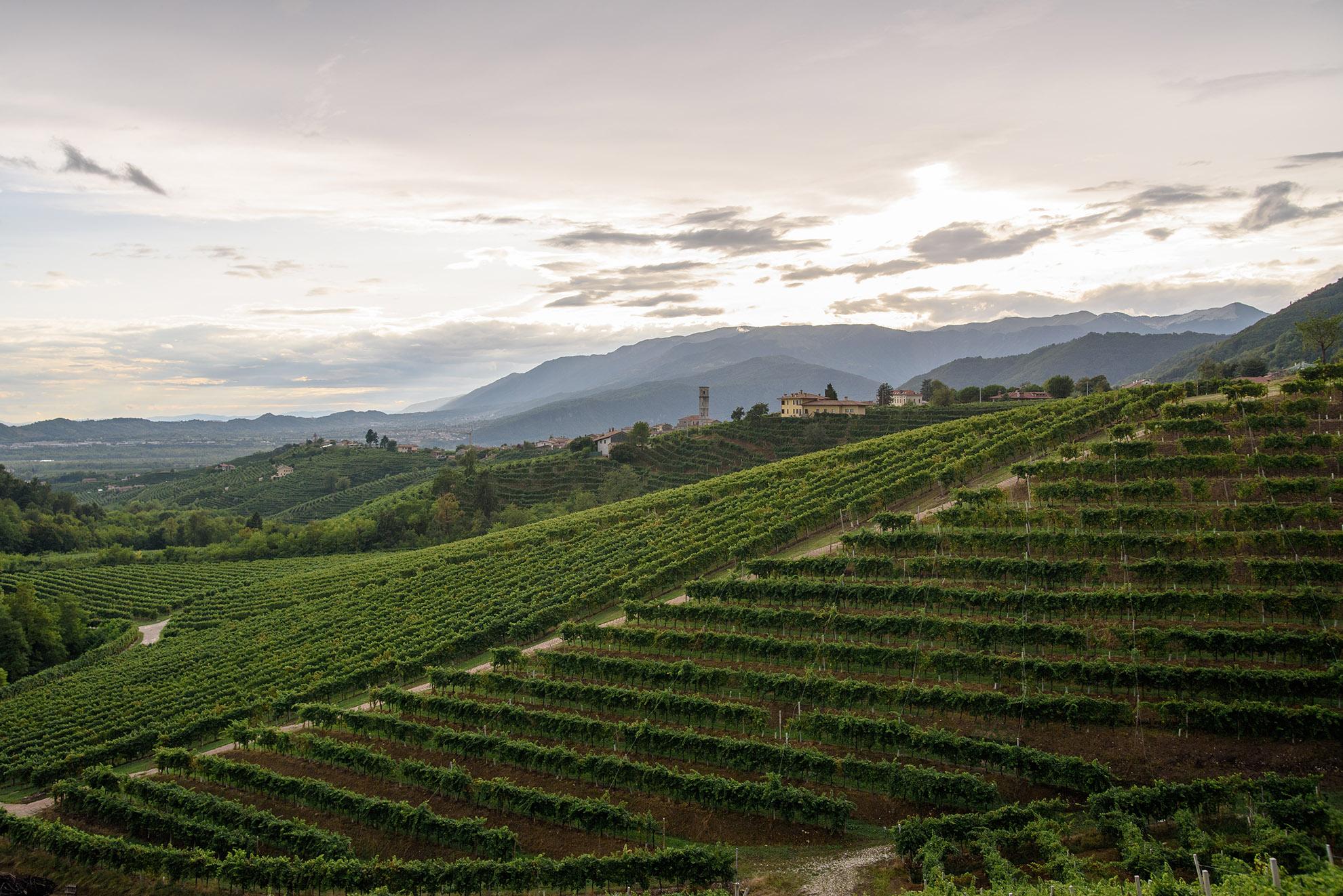 Winnice w Valdobbiadene