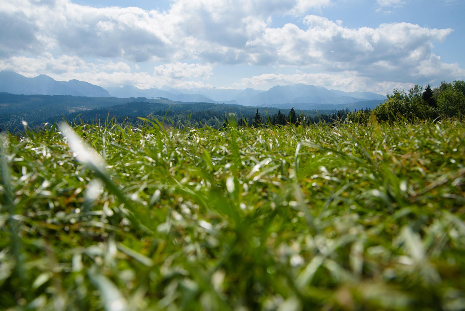 Widok na Tatry z Łapszanki