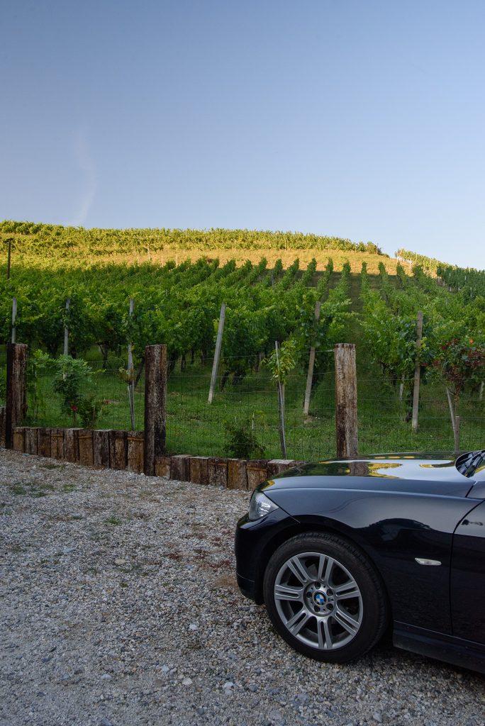 Vinogradi Horvat