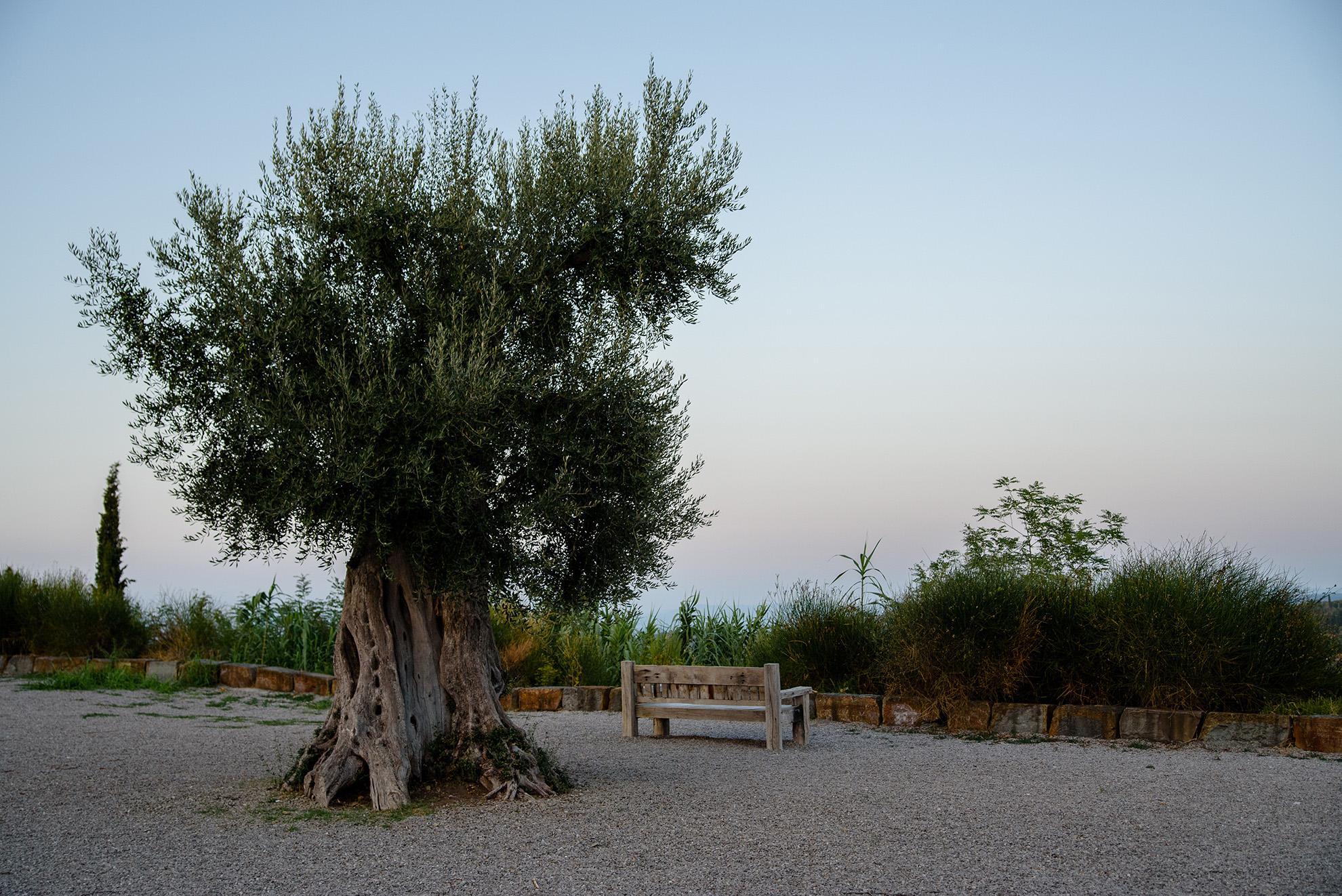 Ławka z widokiem na morze (dla wysokich) w Piranie