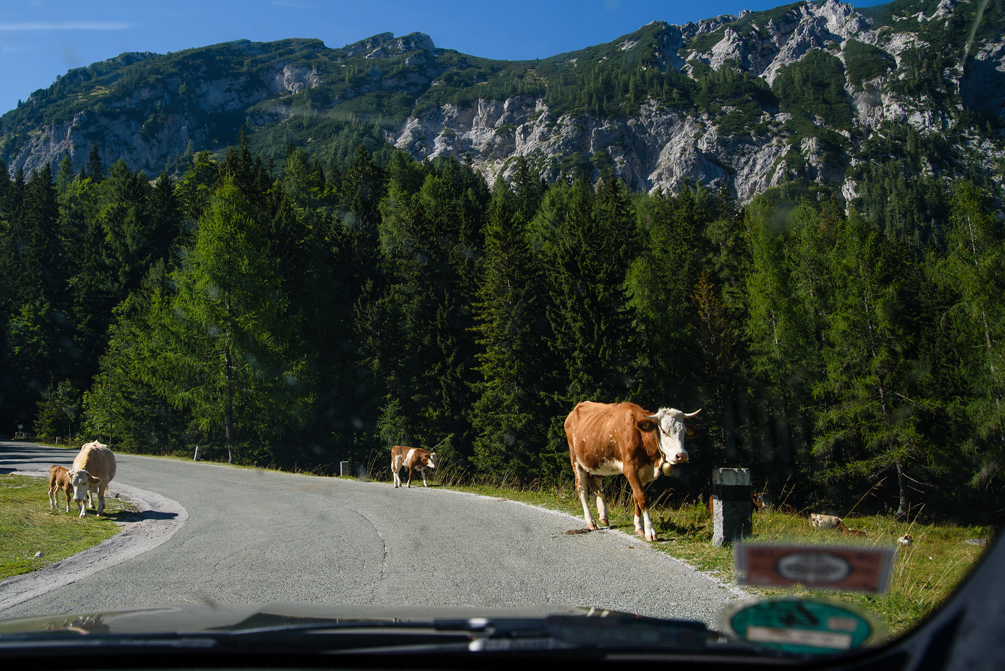 Górskie drogi i górskie krówki