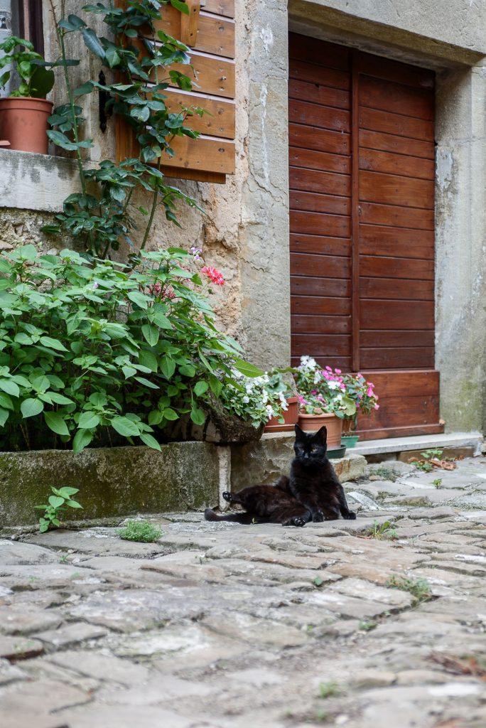 W Grožnjanie jest pełno kotów
