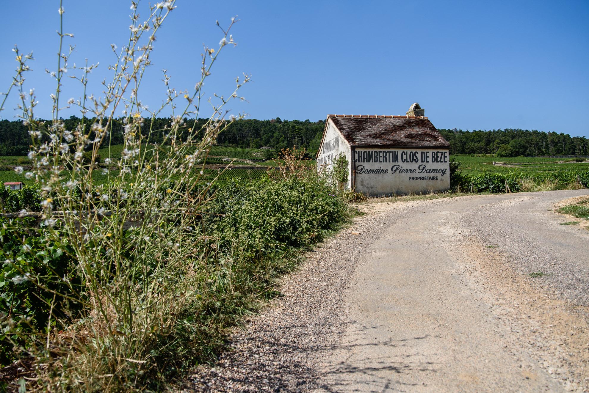 Winnica Domaine Pierre Damoy w apelacji Chambertin-Clos de Bèze