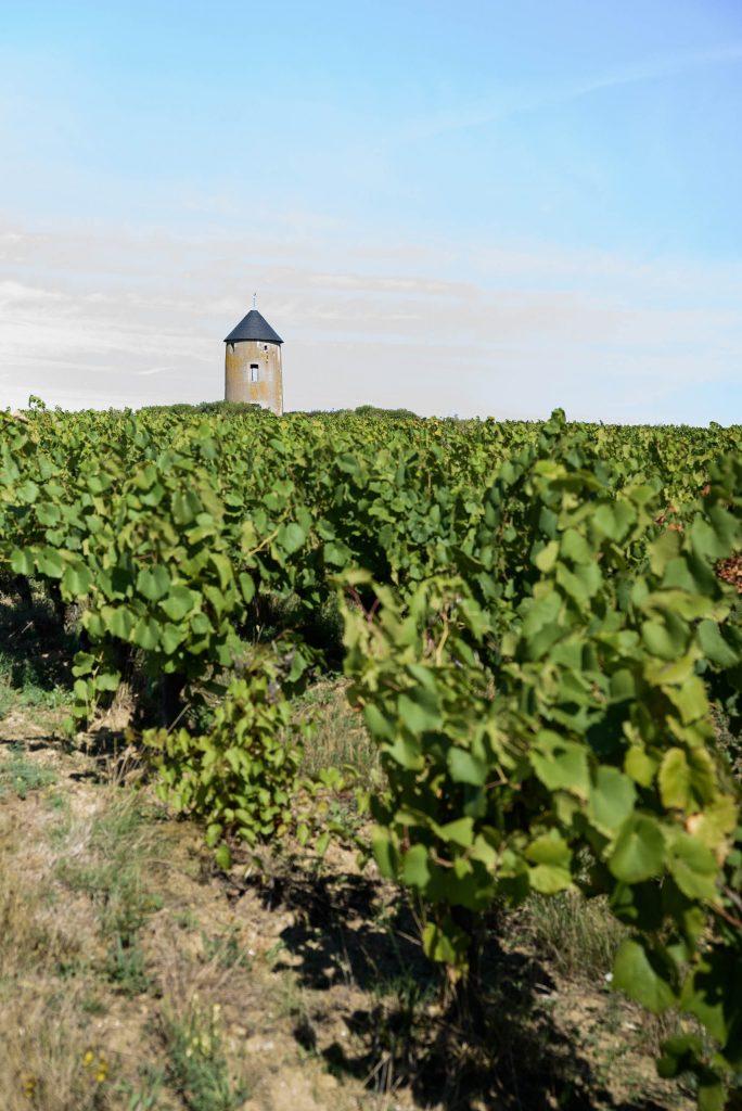 Winnica Domaine Ménard-Gaborit